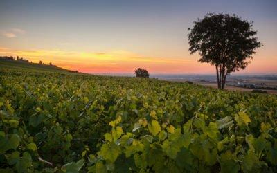Célébrer la diversité des vins de Champagne