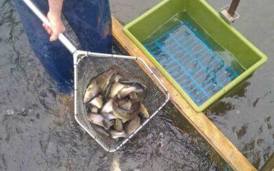 Découvrez la pisciculture